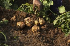 Un suolo sano produce frutti sani.