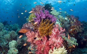 Korallenriff, Raja Ampat, West Papua, Indonesia