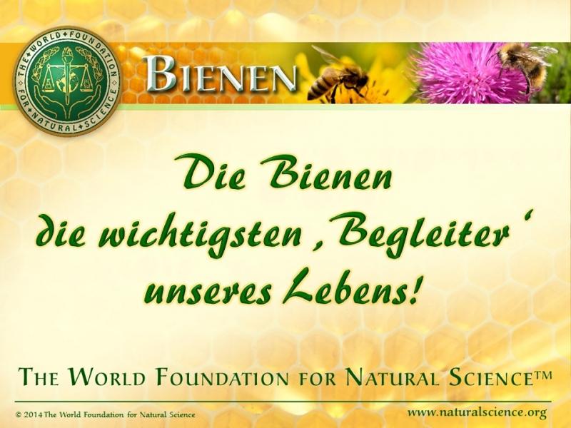 Titelblatt der Publikation : Die Bienen—die wichtigsten 'Begleiter' unseres Lebens!