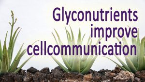 Glyconutrients breast cancer