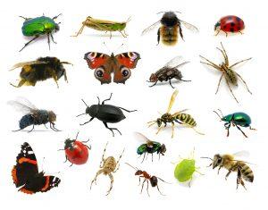 der fr hling verstummt warum immer mehr insekten und v gel. Black Bedroom Furniture Sets. Home Design Ideas