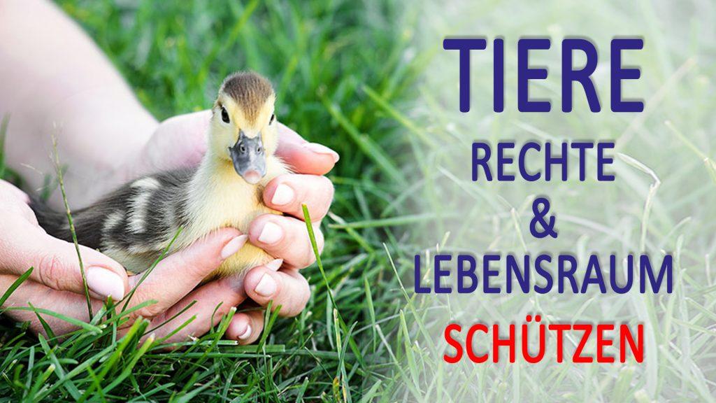 Titelblatt der Publikation : Tiere – Ihr Recht auf Leben und unsere Verantwortung für sie